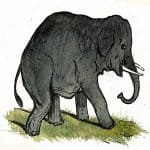 The Mice and the Elephants Panchatantra Stories
